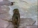 Monkey Sees Itself In Mirror