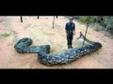 Man Eaten Alive By Anaconda For Discovery Channel And Puked Back Up