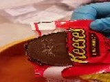 Maggot 2930 S Found Living Inside Reese's Peanut Butter Cups Warning: Vertical Video