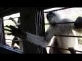 Monkeys On The Train - Cheeky Little Bastards