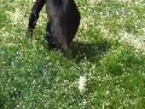Monkeys Go Head To Head In Epic Hill Roll Challenge