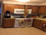 Monkey Cat Climbs For Treats