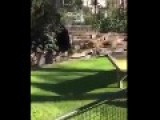 Man Maul 1ff8 Ed By Lions In Barcelona Zoo