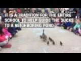 Mother Duck Leads Her Ducklings Through School Hallways