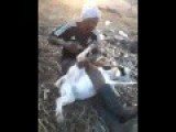 Man Beats His Goat Girlfriend