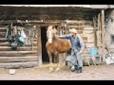 Man Knocks Out A Horse! Single Punch !