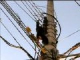 Monkey Takes Electrical Shock And Finds A Helping Hand