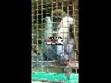 Monkey With Blue Balls