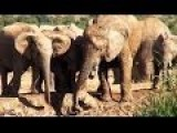 Mother Elephant Rescues Her Baby