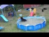 Mama Bear, 5 Cubs Beat The Heat In NJ Family's Pool