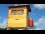 New Invention - Honey Flow FLOWhive : Honey On Tap Directly From Beehive