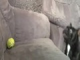 Need.. That.. Ball!