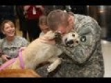 NATIONAL OUTRAGE -- MILITARY ABANDONING SERVICE DOGS