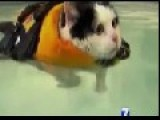 News Anchor Cracks Up On Swimming Cat Piece