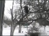 Ninja Cat Robs A Bird Feeder