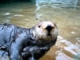 Nellie, The Talking Sea Otter At Point Defiance Zoo