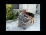 New German Shepherd Fetches Ball, Returns To Find His Soldier Home From Deployment