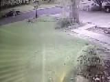 Neighbor Doesn't Leash Dog ..... Bad Mistake