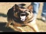 NJ Cop Shoots And Kills Dog After Jumping Fence Into Wrong Backyard With Gun Drawn