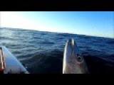 Offshore Kayak Fishing For Mackerel