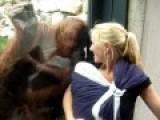 Orangutan Meets Human Baby
