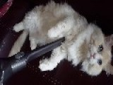 Owner Stops Cat From Shedding Everywhere With 'vac-Grooming' Technique