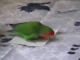 Origami Master Parrot