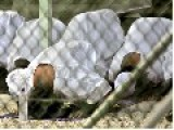 OBAMA TO RELEASE 6 MORE GITMO TERRORISTS!