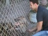 Original Owner Surprises Hyena On 4th Birthday