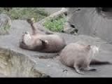 Otter Juggling A Rock