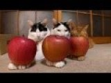 Over 12 Minutes Of Tired Looking Cats Having Things Balanced On Them