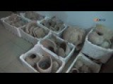 Oct. 20, 2016 Stolen Syrian Artifacts Recovered By The YPG