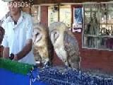 Owls Twerking
