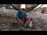 Penguin Forms Bond With Man Who Saved Its Life
