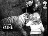Pet Tiger 1954