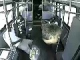 Passengers Step In When Man Tries To Assault Bus Driver