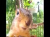 Pat The Talking Squirrel There's No Racist Like A Liberal Racist