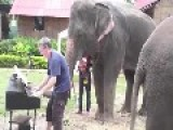 PIANO PLAYING ELEPHANT