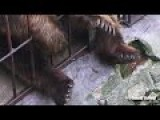 Papa Bear And Mamma Bear Chilling In Prison In 4K