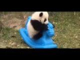 Panda And Her Pony