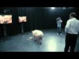 Prime Minister David Cameron Fucks A Pig!!!
