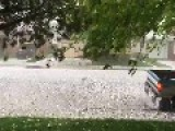 Pig Runs Amok During Hailstorm In Billings, Montana