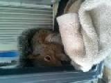 Petting And Feeding A Wild Squirrel Cheetos