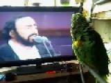 Pavarotti Parrot Sings Opera