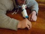 Paralyzed Bunny Uses Miniature Skateboard To Move Around