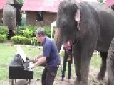 Piano Duet With An Elephant