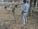 Peeing On An Electric Fence
