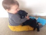 Pug Puppy Showers His Baby Playmate With Kisses