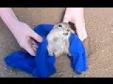 Prairie Dog To Chubby To Get Out Of Road Hole