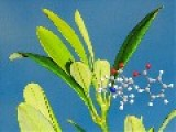 Plants May Use Newly Discovered Molecular Language To Communicate